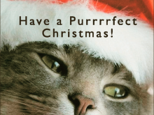 18 Free Cat Christmas Card Template Photo by Cat Christmas Card Template