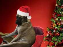 35 Format Christmas Card Template Dog for Ms Word by Christmas Card Template Dog